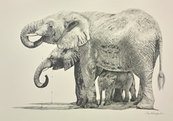 Elephant Drinking (under cover) by Pip McGarry - Original Drawing on Mounted Paper sized 17x13 inches. Available from Whitewall Galleries